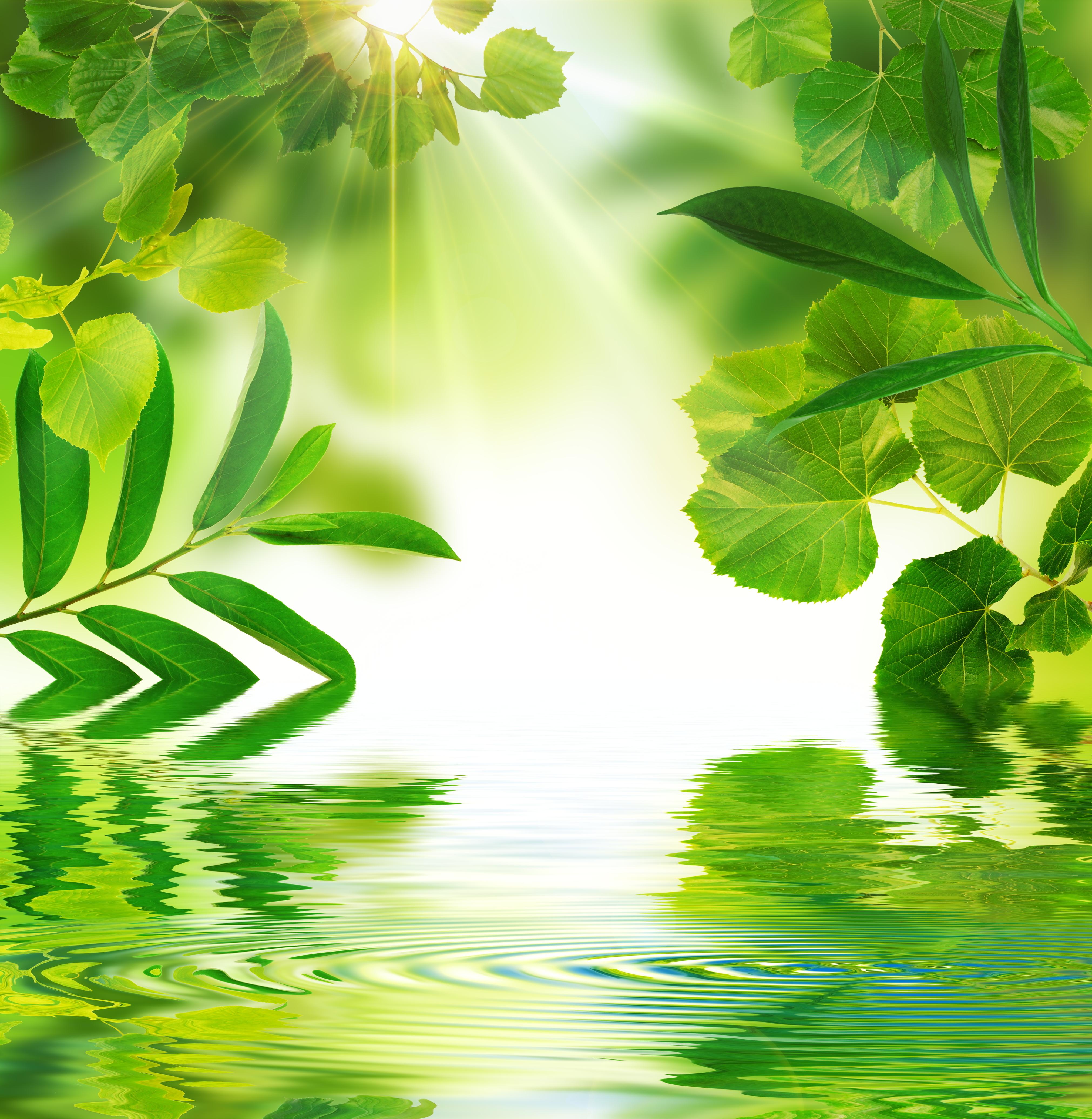 Environnement végétal